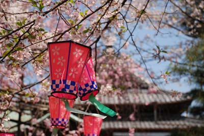 Motoyama shrine sakura 2
